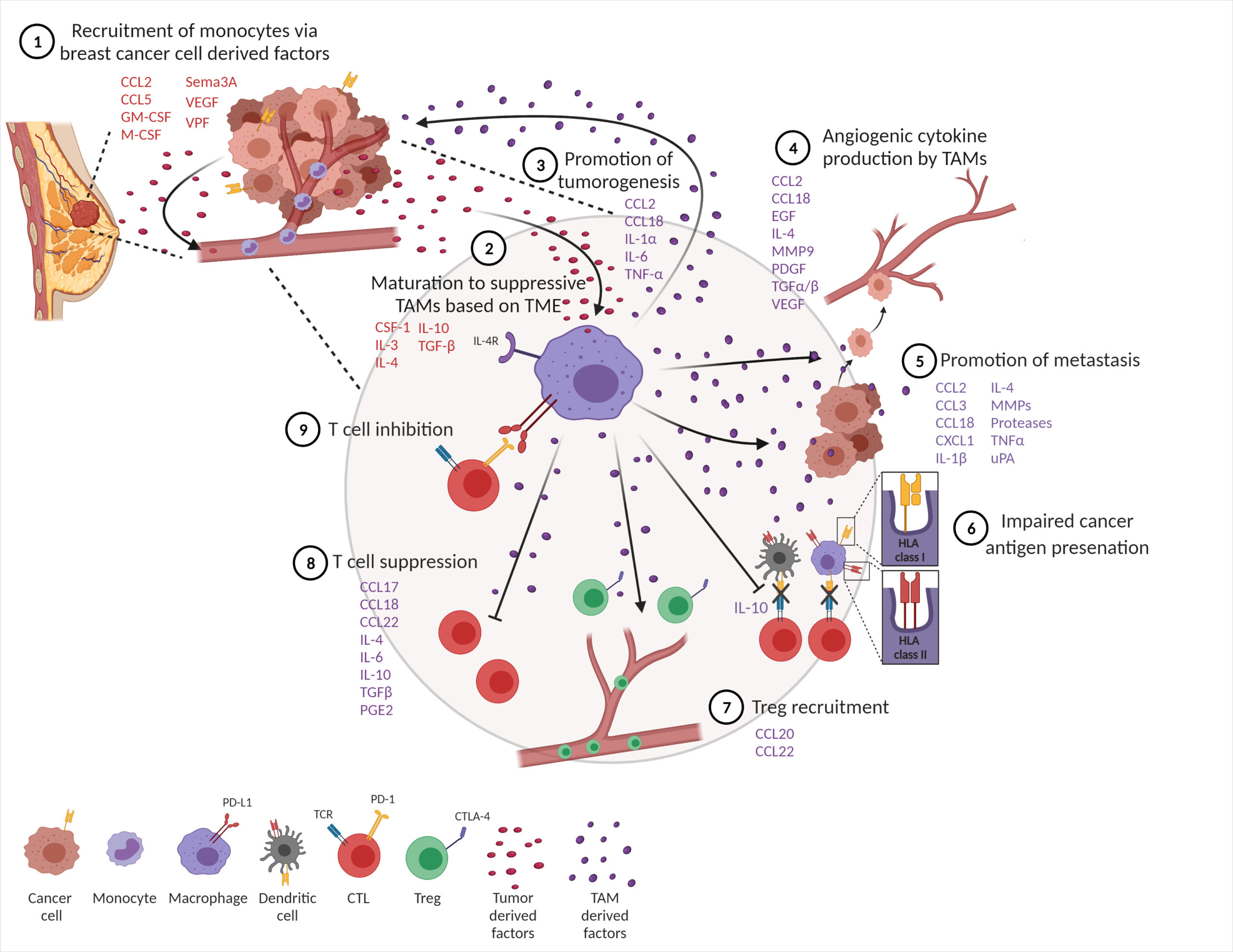 Congratulations To Dr. Anita Mehta And The Guerriero Lab On Their Recent Review Of Macrophage Biology And Mechanisms Of Immune Suppression In Breast Cancer That Was Published In Frontiers Immunology